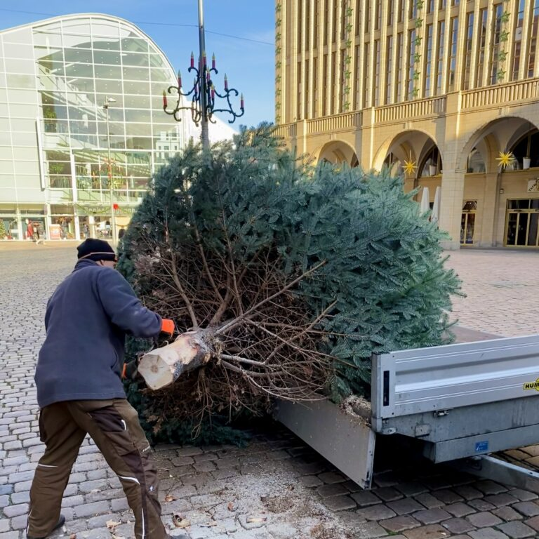 Weihnachtsbaum am Chemnitzer Markt wird gesägt.